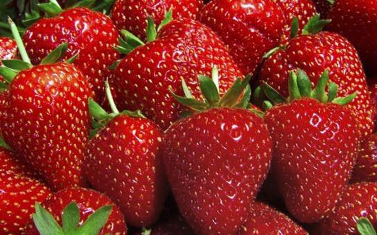 Vrtne jagode